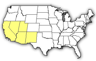 Map of US states the Arizona Bark Scorpion is found in.