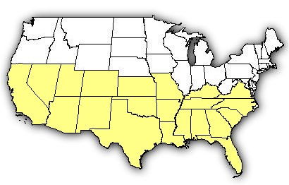 Map of US states the Brown Widow is found in.